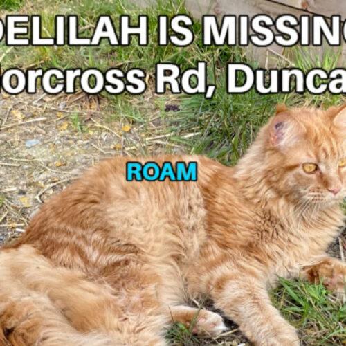 Lost Cat: Delilah