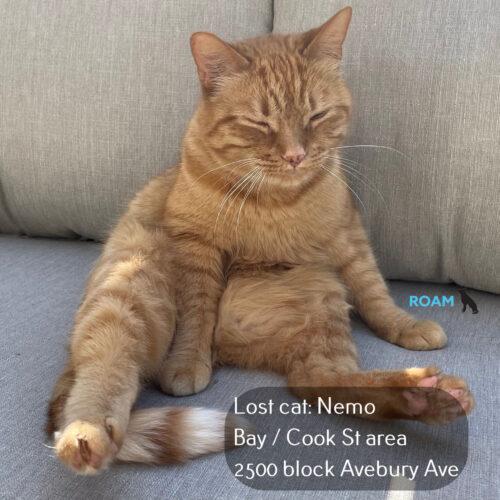 Lost Cat: Nemo
