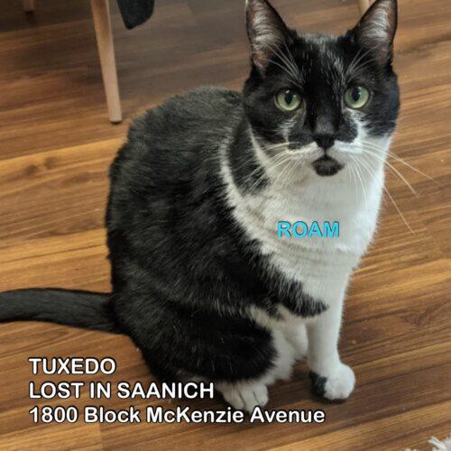Lost Cat: tuxedo