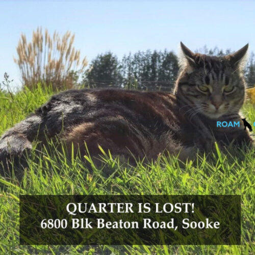 Lost Cat: Quarter