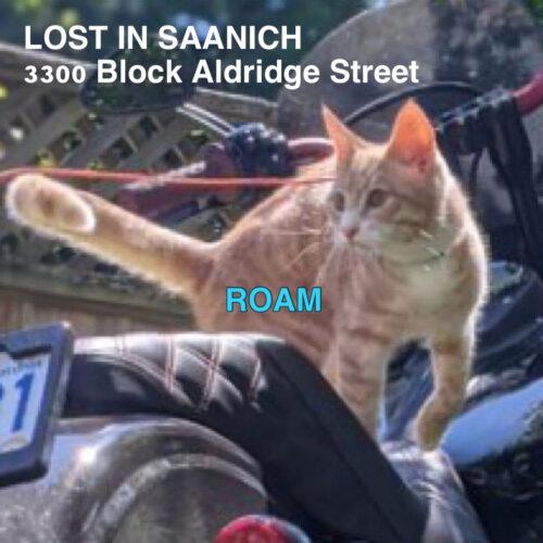 Lost Cat: