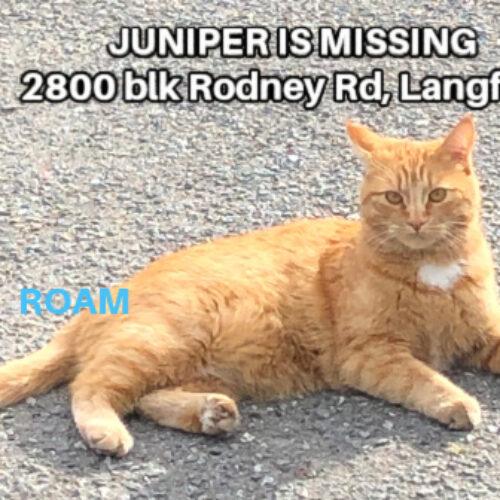 Lost Cat: Juniper