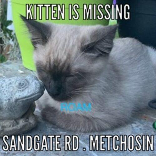 Lost Cat: Kitten