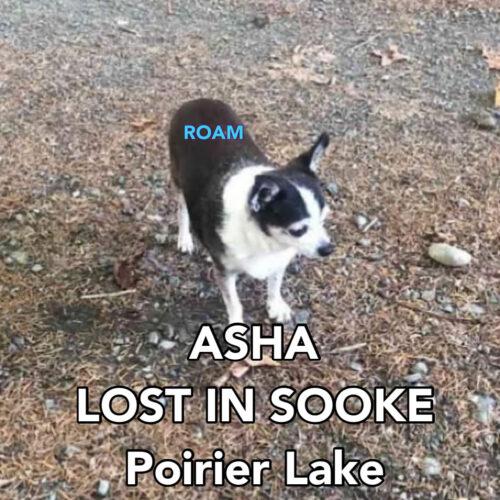 Lost Dog: Asha