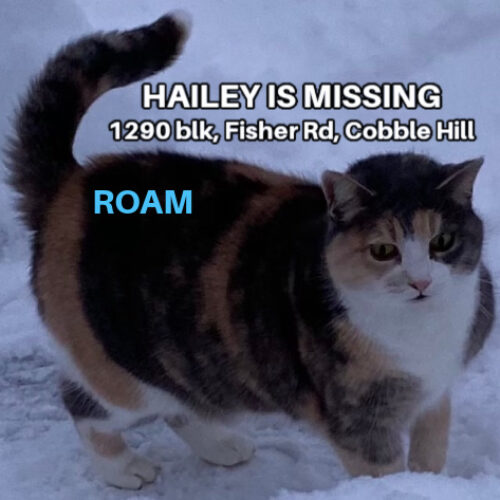 Lost Cat: Hailey