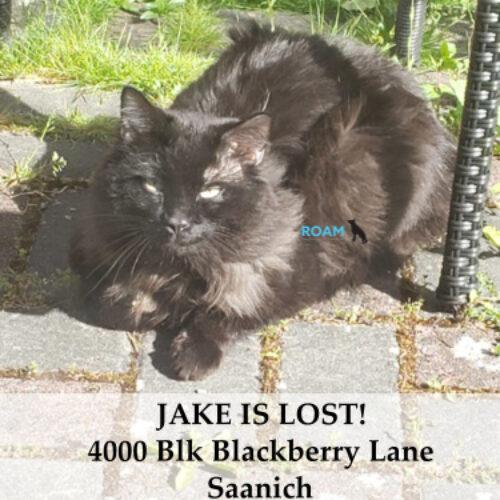 Lost Cat: Jake
