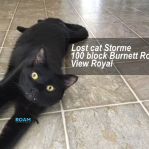 Lost Cat: Storme