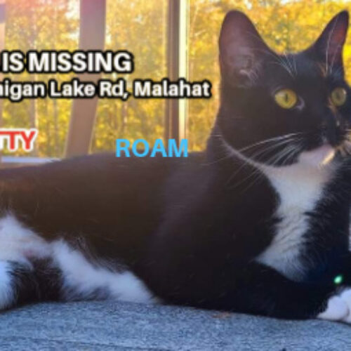 Lost Cat: Naia