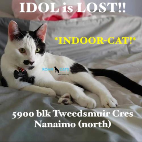 Lost Cat: Idol *INDOOR-ONLY CAT!*