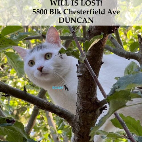 Lost Cat: Will